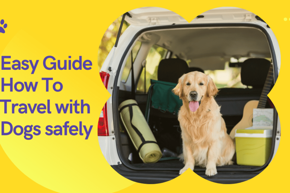 Easy Guide How To Travel with Dogs safely