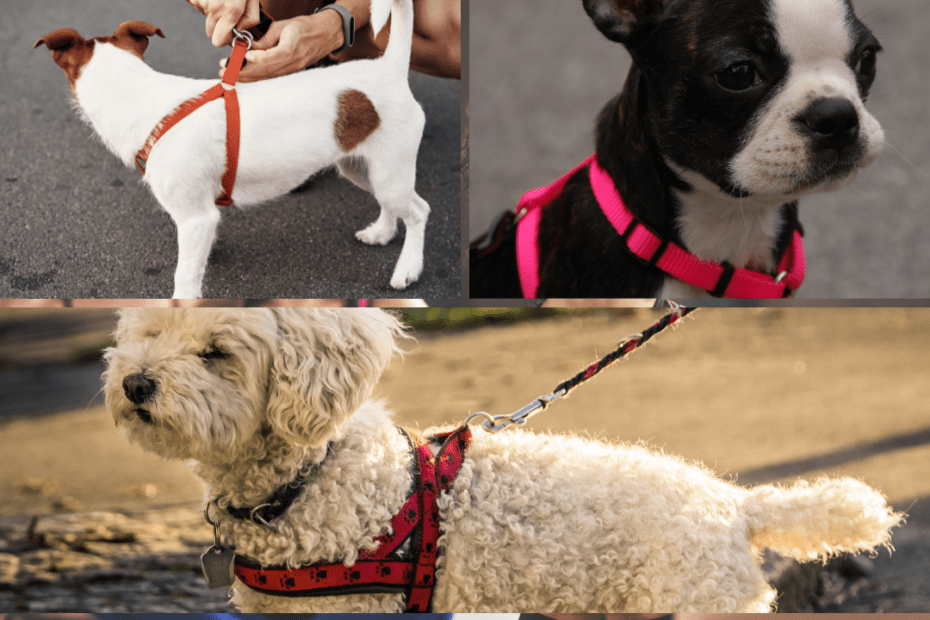 harnesses for puppies