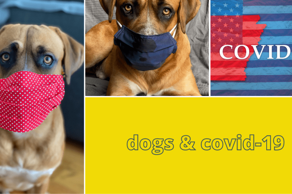dog covid-19