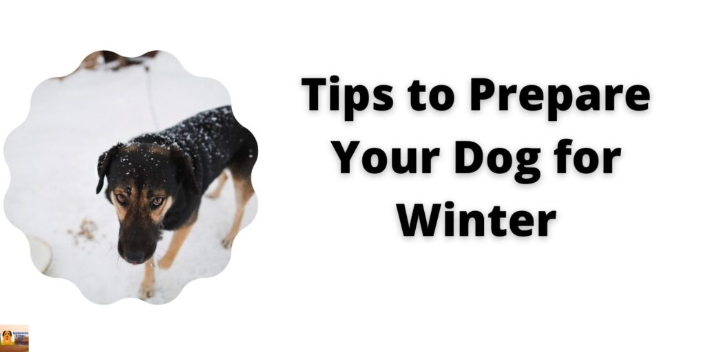 Winter preparation for dogs