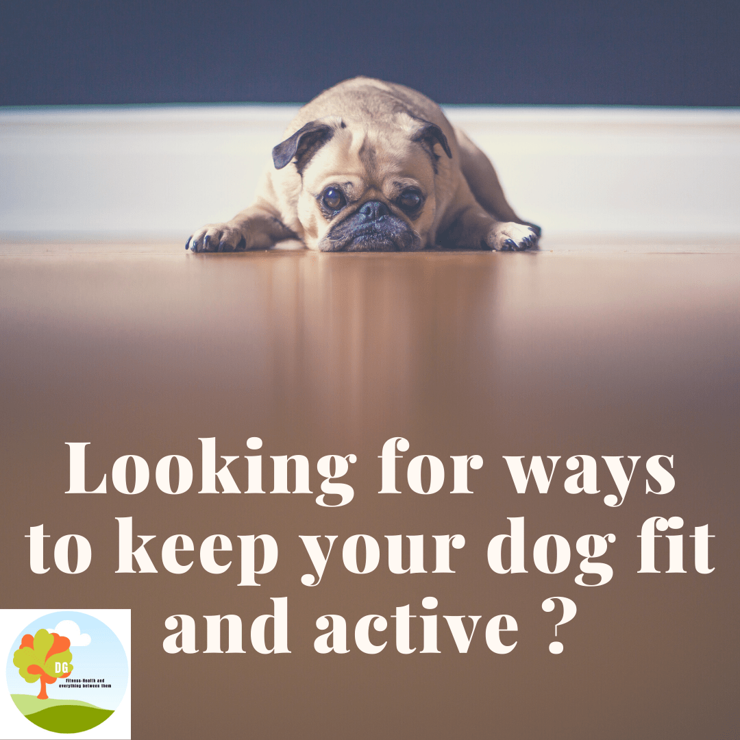 Kip your dog fit and active