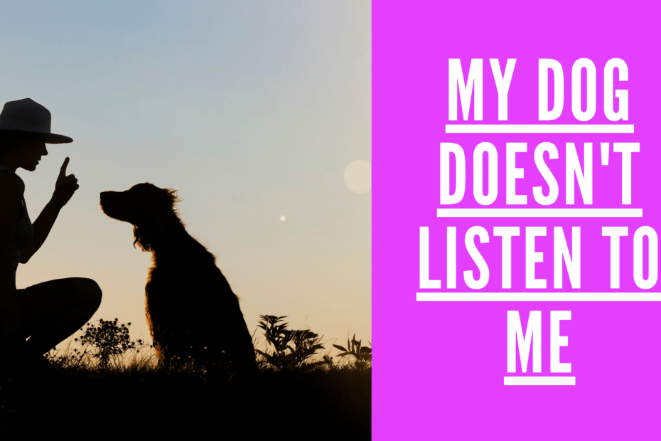 My dog doesnot listen to me