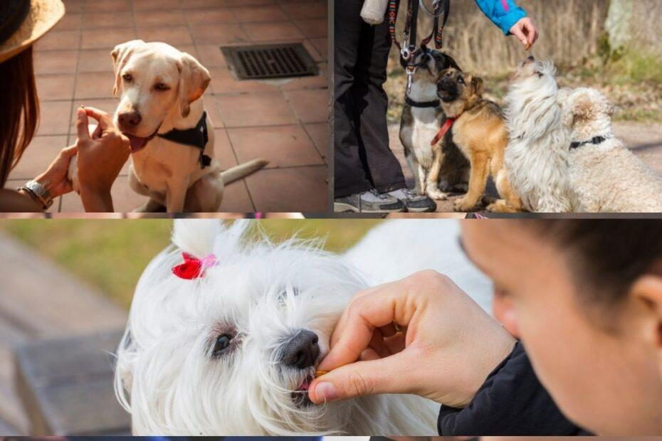 Secrets to Dog Training Success and how to Reward Your Dog