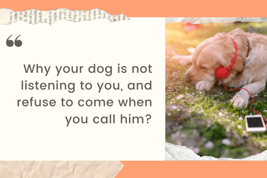 Why your dog is not listen to you- and refuse to come when you call him1200628