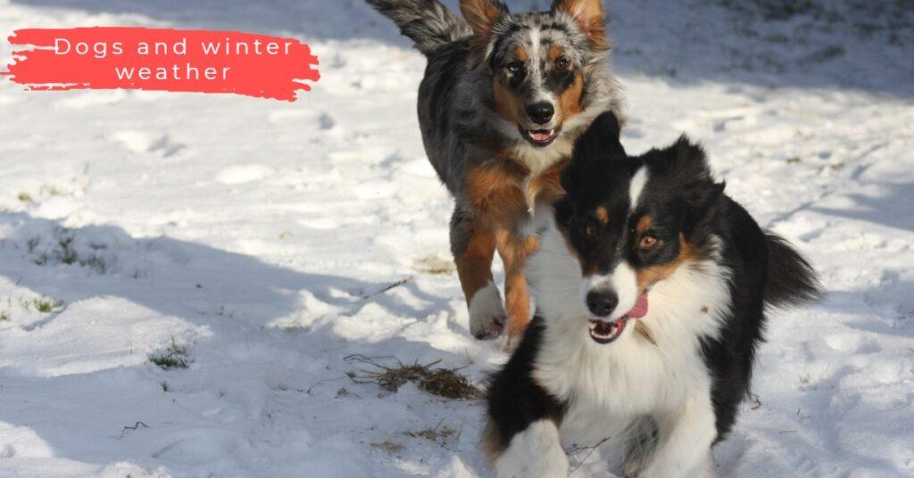 dogs and winter weather-1
