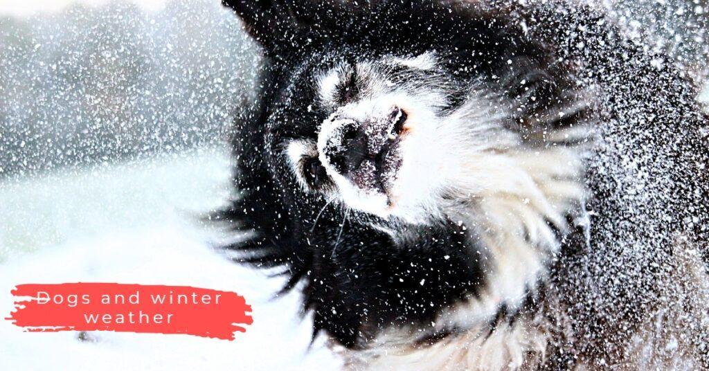 prepare your dog for winter