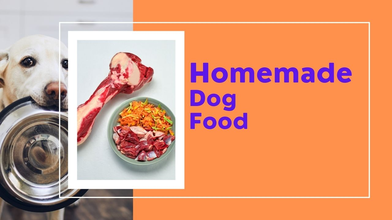 homemade food for dogs