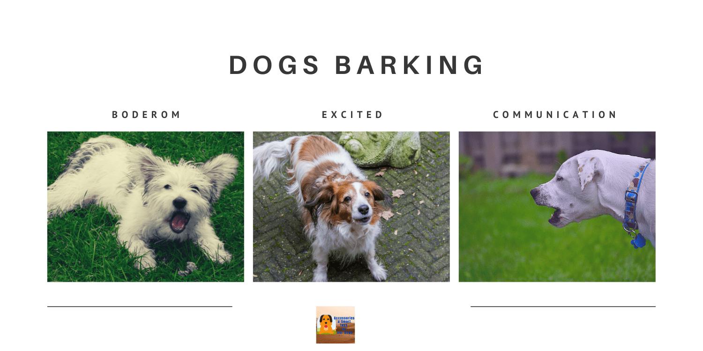 dogs barking