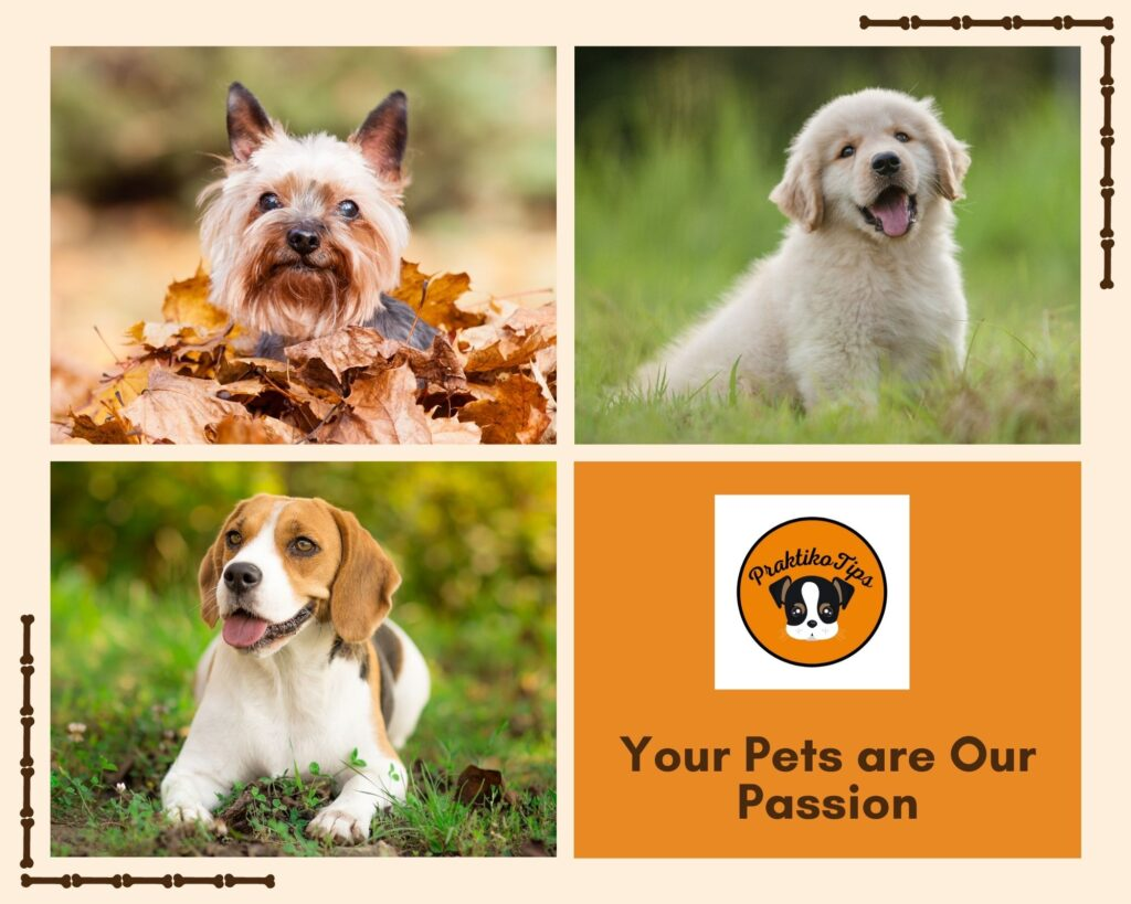 Dogs Our Passion