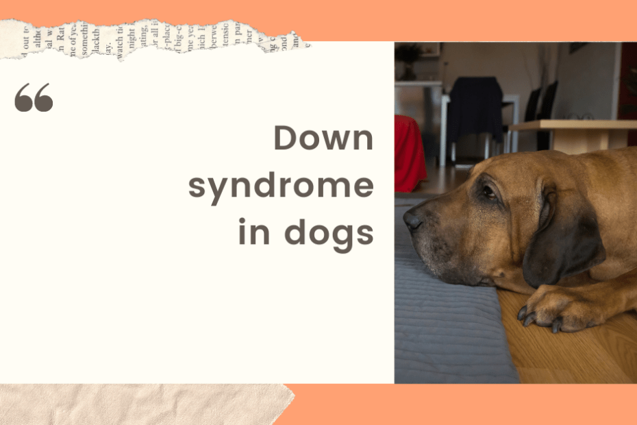 Down syndrome in dogs