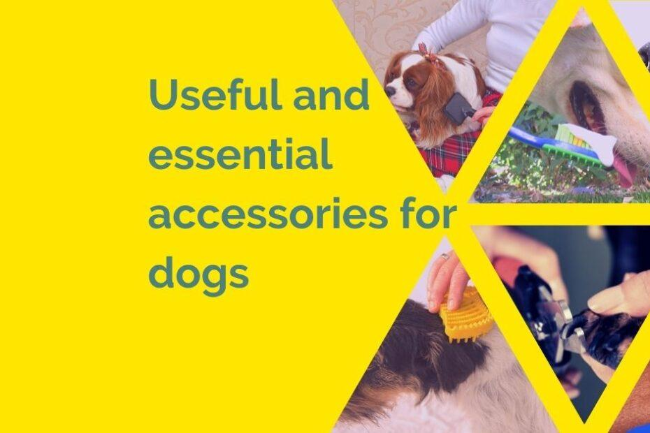 Useful and essential accessories for dogs