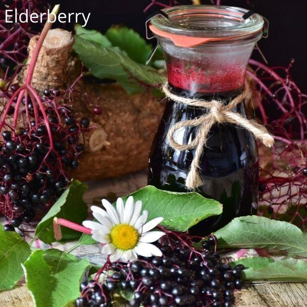 elderberry - anti-inflammatory drinks