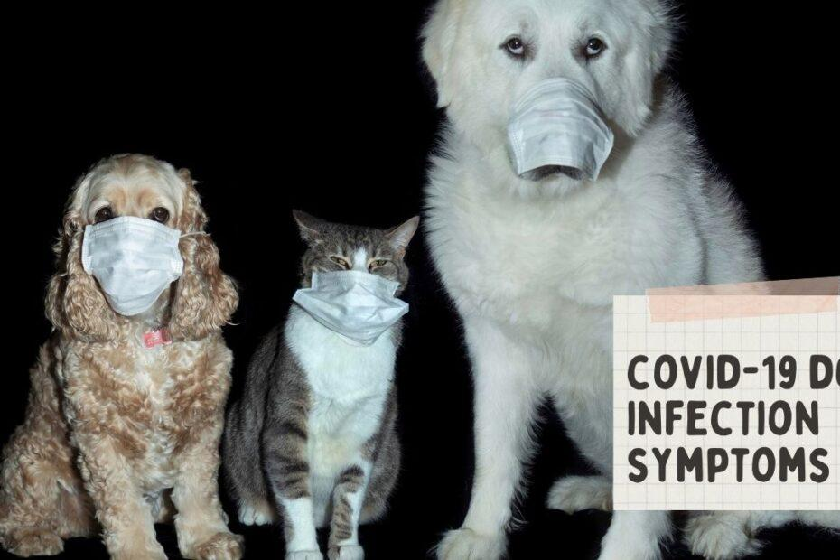 covid-19 dog infection symptoms