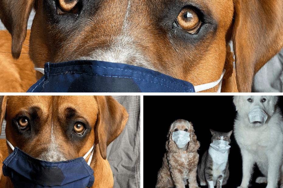 dogs covid-19