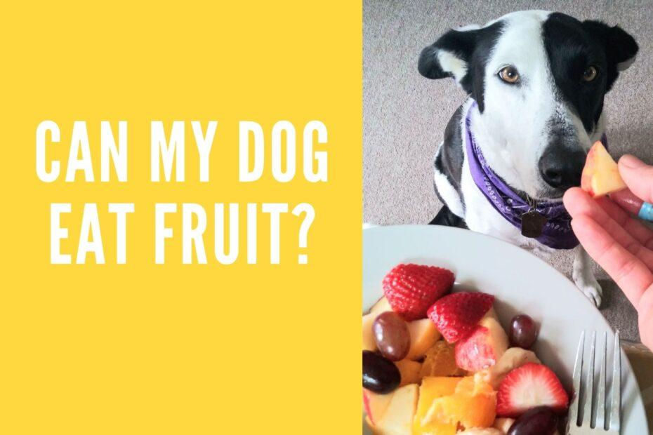 Can my dog eat fruit