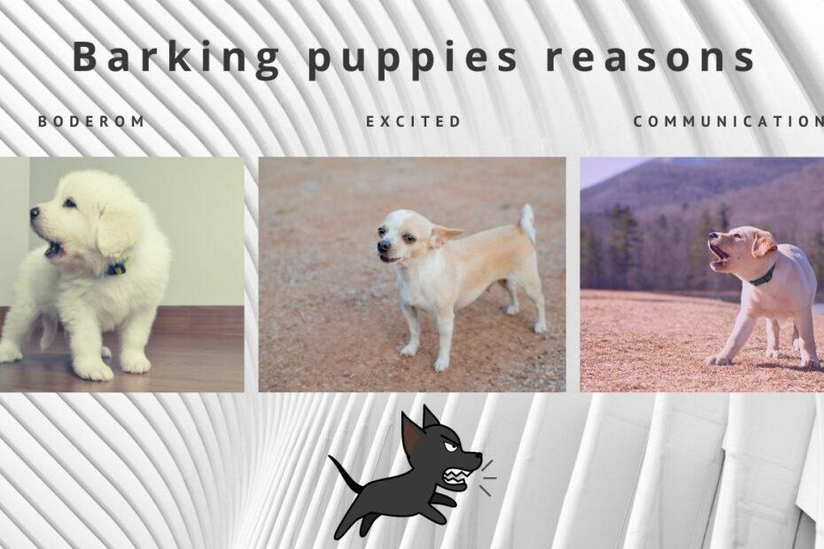 barking puppies reasons