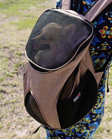 dog carrier brown