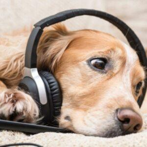dogs don't listen